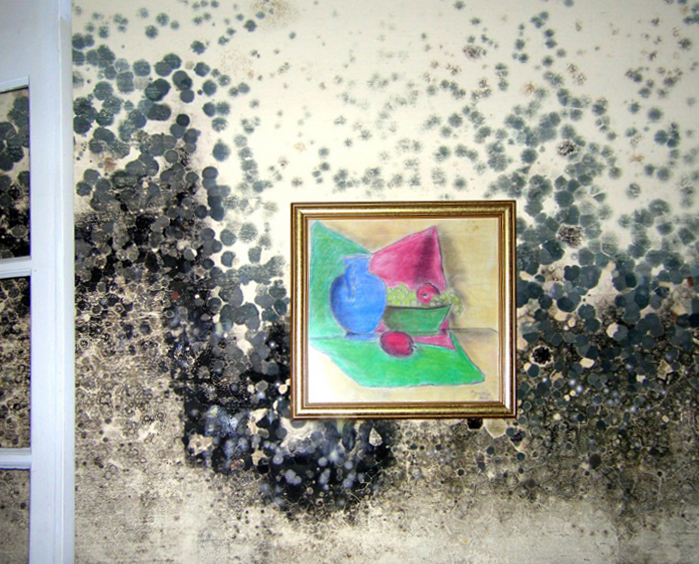A photograph of mold growing on a wall behind a painting.
